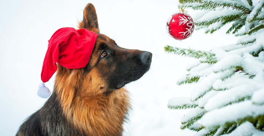 Animali Natale Immagini.Cani E Gatti Come Fare Un Albero Di Natale A Prova Di Zampa